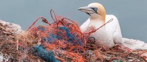 Plastic's Impact on Wildlife